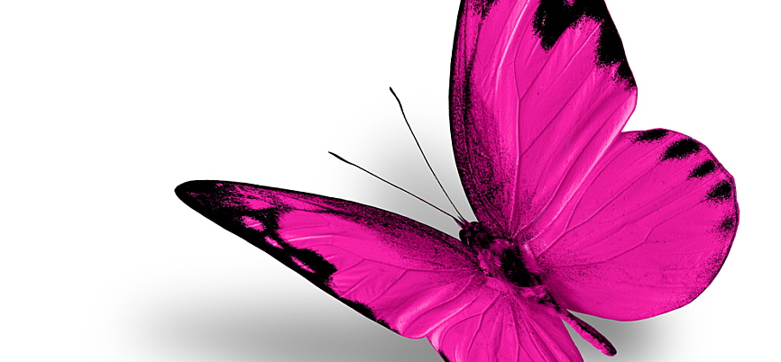 A bright pink butterfly on a white background.
