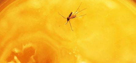 Mosquito stuck in amber, symbolizing LMS curriculum pitfalls